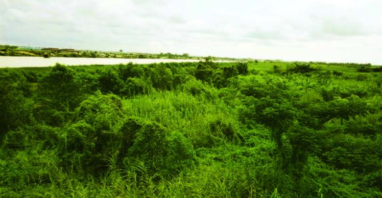 ◎JETROがミャンマー 農業ミッションを実施